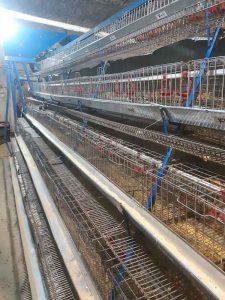 قفس مرغ تخمگذار