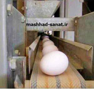 جمع آوری تخم مرغ در قفس مرغ تخمگذار باطری تمام اتومات