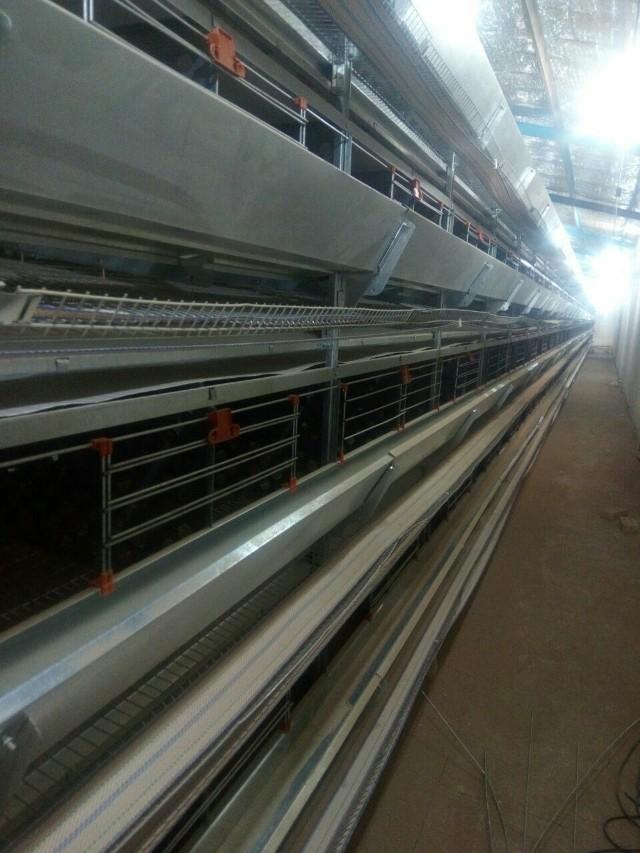 خرید قفس مرغ تخمگذار و قیمت قفس مرغ تخمگذار