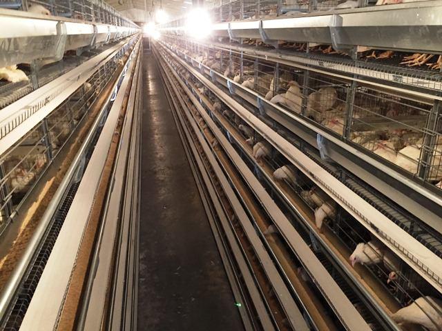 خرید قفس مرغ تخمگذار با قیمت مناسب