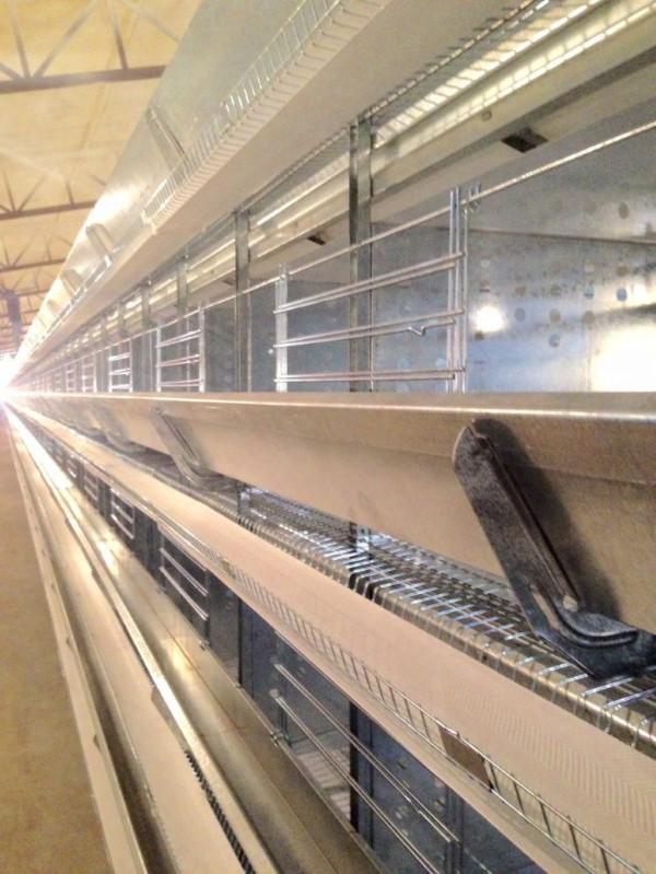 قفس مرغ تخمگذار باتری و قیمت قفس مرغ تخمگذار